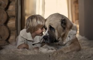 10382810-R3L8T8D-650-small-babies-children-big-dogs-37__880