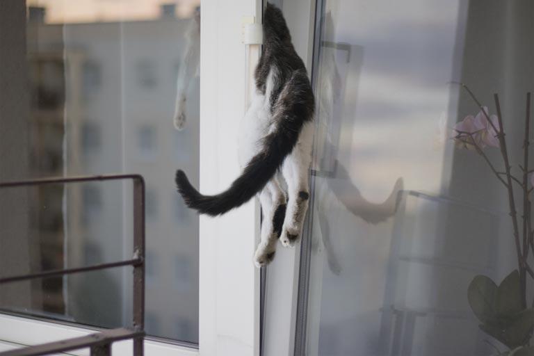 cat-stuck