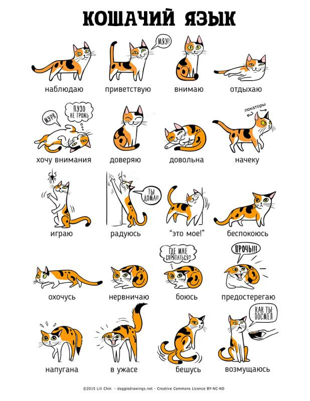 язык тела кошки