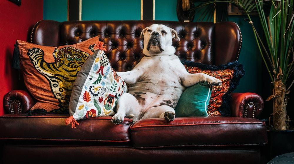 6 правил ответственного собаковода