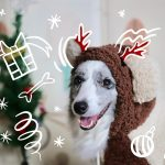 gift-for-dog-lovers